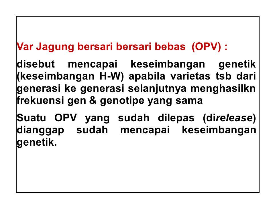 Var Jagung bersari bersari bebas (OPV) : disebut mencapai keseimbangan genetik (keseimbangan H-W) apabila varietas tsb dari generasi ke generasi selan