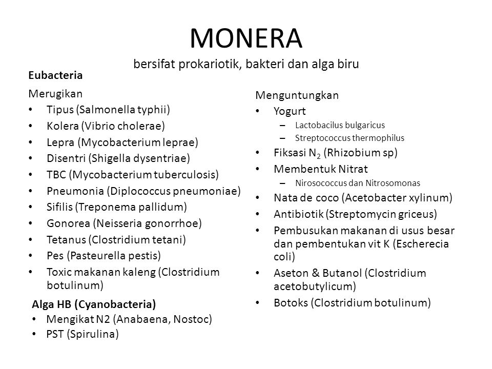 MONERA bersifat prokariotik, bakteri dan alga biru Merugikan Tipus (Salmonella typhii) Kolera (Vibrio cholerae) Lepra (Mycobacterium leprae) Disentri (Shigella dysentriae) TBC (Mycobacterium tuberculosis) Pneumonia (Diplococcus pneumoniae) Sifilis (Treponema pallidum) Gonorea (Neisseria gonorrhoe) Tetanus (Clostridium tetani) Pes (Pasteurella pestis) Toxic makanan kaleng (Clostridium botulinum) Menguntungkan Yogurt – Lactobacilus bulgaricus – Streptococcus thermophilus Fiksasi N 2 (Rhizobium sp) Membentuk Nitrat – Nirosococcus dan Nitrosomonas Nata de coco (Acetobacter xylinum) Antibiotik (Streptomycin griceus) Pembusukan makanan di usus besar dan pembentukan vit K (Escherecia coli) Aseton & Butanol (Clostridium acetobutylicum) Botoks (Clostridium botulinum) Alga HB (Cyanobacteria) Mengikat N2 (Anabaena, Nostoc) PST (Spirulina) Eubacteria