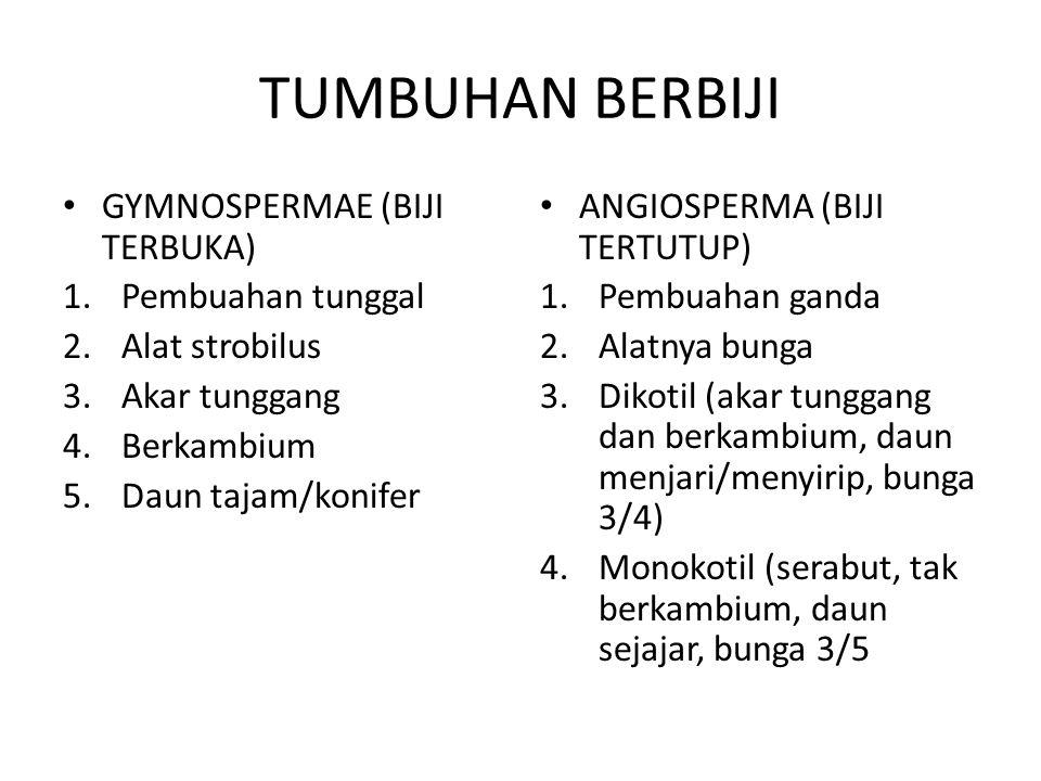 TUMBUHAN BERBIJI GYMNOSPERMAE (BIJI TERBUKA) 1.Pembuahan tunggal 2.Alat strobilus 3.Akar tunggang 4.Berkambium 5.Daun tajam/konifer ANGIOSPERMA (BIJI TERTUTUP) 1.Pembuahan ganda 2.Alatnya bunga 3.Dikotil (akar tunggang dan berkambium, daun menjari/menyirip, bunga 3/4) 4.Monokotil (serabut, tak berkambium, daun sejajar, bunga 3/5