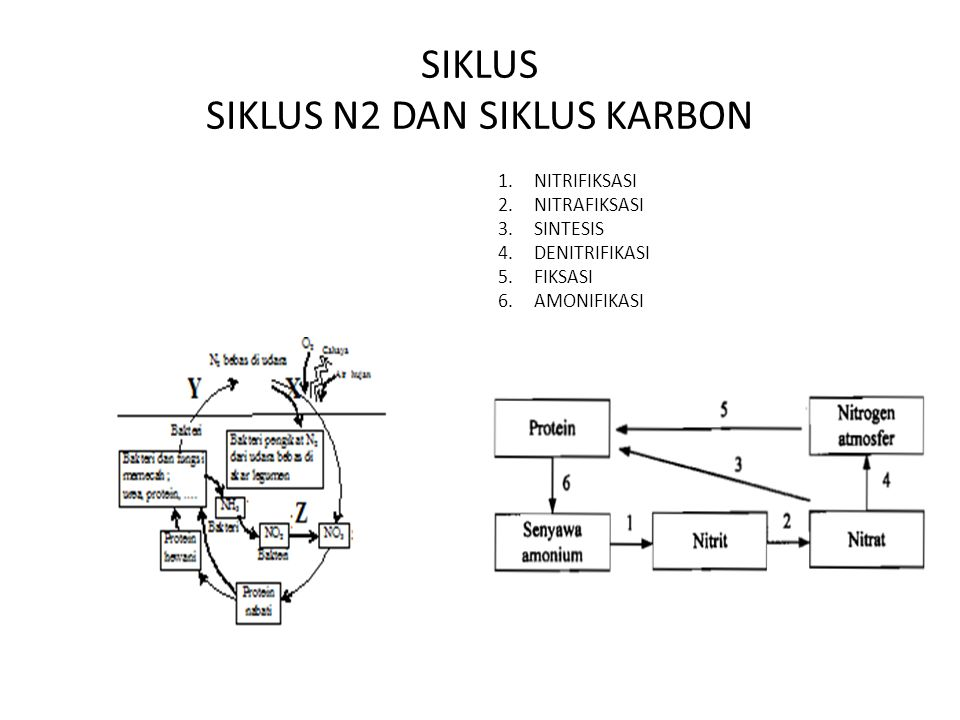 SIKLUS SIKLUS N2 DAN SIKLUS KARBON 1.NITRIFIKSASI 2.NITRAFIKSASI 3.SINTESIS 4.DENITRIFIKASI 5.FIKSASI 6.AMONIFIKASI