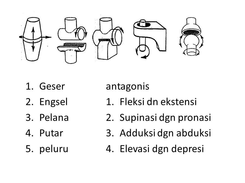 1.Geser 2.Engsel 3.Pelana 4.Putar 5.peluru antagonis 1.Fleksi dn ekstensi 2.Supinasi dgn pronasi 3.Adduksi dgn abduksi 4.Elevasi dgn depresi
