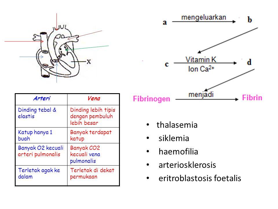 thalasemia siklemia haemofilia arteriosklerosis eritroblastosis foetalis ArteriVena Dinding tebal & elastis Dinding lebih tipis dengan pembuluh lebih besar Katup hanya 1 buah Banyak terdapat katup Banyak O2 kecuali arteri pulmonalis Banyak CO2 kecuali vena pulmonalis Terletak agak ke dalam Terletak di dekat permukaan