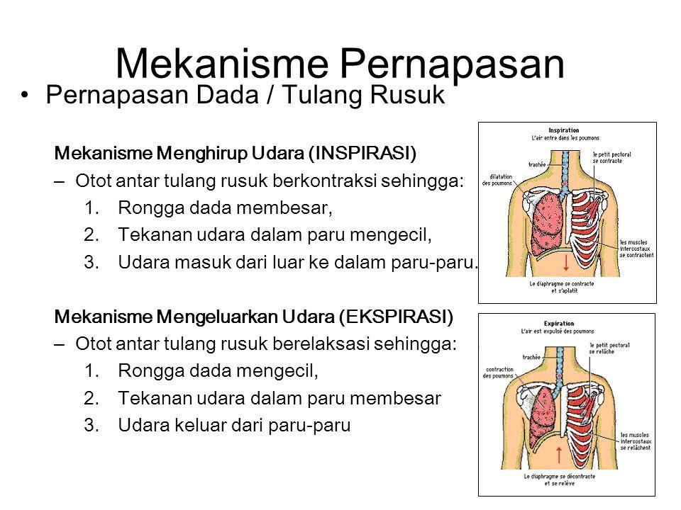 Mekanisme Pernapasan Pernapasan Dada / Tulang Rusuk Mekanisme Menghirup Udara (INSPIRASI) –Otot antar tulang rusuk berkontraksi sehingga: 1.Rongga dada membesar, 2.Tekanan udara dalam paru mengecil, 3.Udara masuk dari luar ke dalam paru-paru.