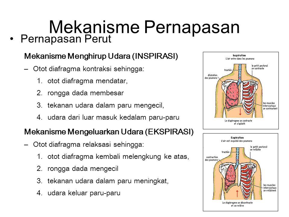 Mekanisme Pernapasan Pernapasan Perut Mekanisme Menghirup Udara (INSPIRASI) –Otot diafragma kontraksi sehingga: 1.otot diafragma mendatar, 2.rongga dada membesar 3.tekanan udara dalam paru mengecil, 4.udara dari luar masuk kedalam paru-paru Mekanisme Mengeluarkan Udara (EKSPIRASI) –Otot diafragma relaksasi sehingga: 1.otot diafragma kembali melengkung ke atas, 2.rongga dada mengecil 3.tekanan udara dalam paru meningkat, 4.udara keluar paru-paru
