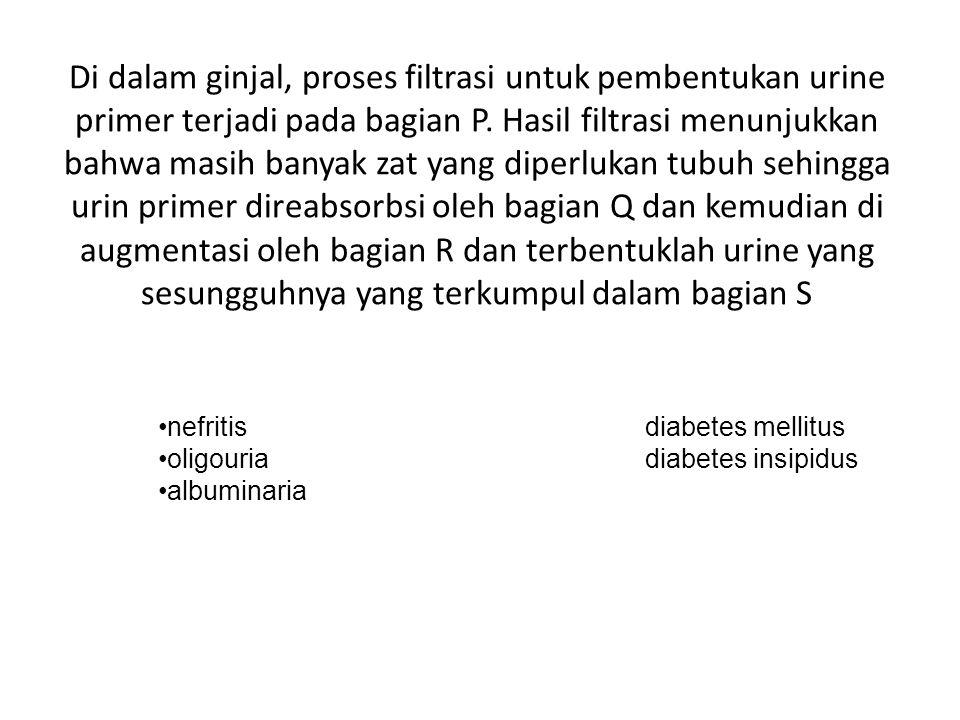Di dalam ginjal, proses filtrasi untuk pembentukan urine primer terjadi pada bagian P.