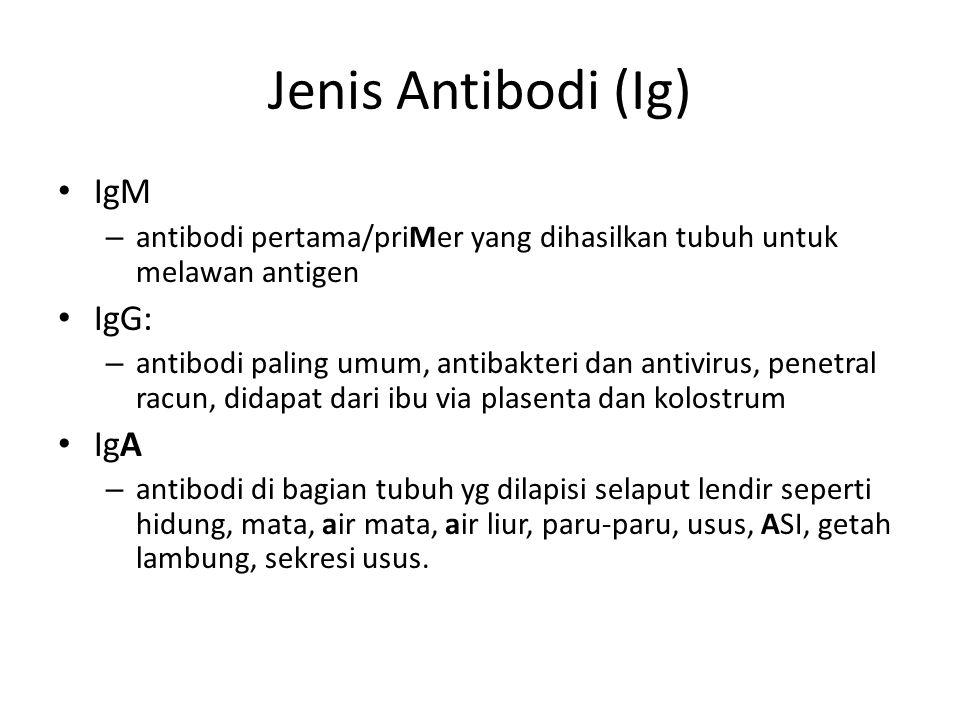 Jenis Antibodi (Ig) IgM – antibodi pertama/priMer yang dihasilkan tubuh untuk melawan antigen IgG: – antibodi paling umum, antibakteri dan antivirus, penetral racun, didapat dari ibu via plasenta dan kolostrum IgA – antibodi di bagian tubuh yg dilapisi selaput lendir seperti hidung, mata, air mata, air liur, paru-paru, usus, ASI, getah lambung, sekresi usus.