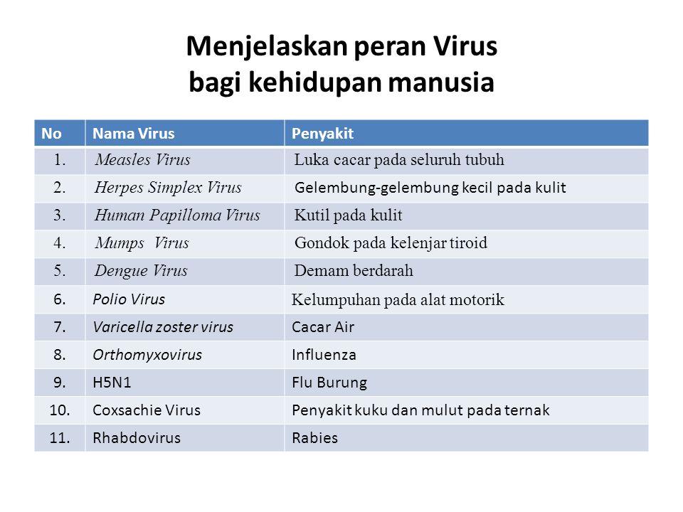 Menjelaskan peran Virus bagi kehidupan manusia NoNama VirusPenyakit 1.Measles VirusLuka cacar pada seluruh tubuh 2.Herpes Simplex Virus Gelembung-gelembung kecil pada kulit 3.Human Papilloma VirusKutil pada kulit 4.Mumps VirusGondok pada kelenjar tiroid 5.Dengue VirusDemam berdarah 6.Polio Virus Kelumpuhan pada alat motorik 7.Varicella zoster virusCacar Air 8.OrthomyxovirusInfluenza 9.H5N1Flu Burung 10.Coxsachie VirusPenyakit kuku dan mulut pada ternak 11.RhabdovirusRabies
