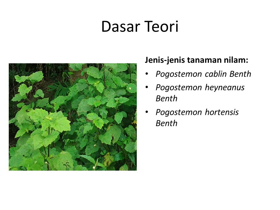 Dasar Teori Jenis-jenis tanaman nilam: Pogostemon cablin Benth Pogostemon heyneanus Benth Pogostemon hortensis Benth