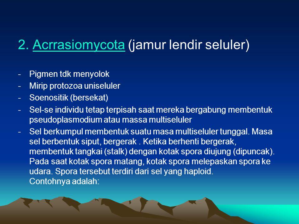 2. Acrrasiomycota (jamur lendir seluler)Acrrasiomycota -Pigmen tdk menyolok -Mirip protozoa uniseluler -Soenositik (bersekat) -Sel-se individu tetap t