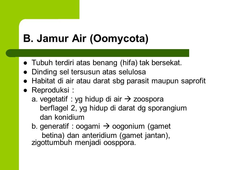 B. Jamur Air (Oomycota) Tubuh terdiri atas benang (hifa) tak bersekat. Dinding sel tersusun atas selulosa Habitat di air atau darat sbg parasit maupun