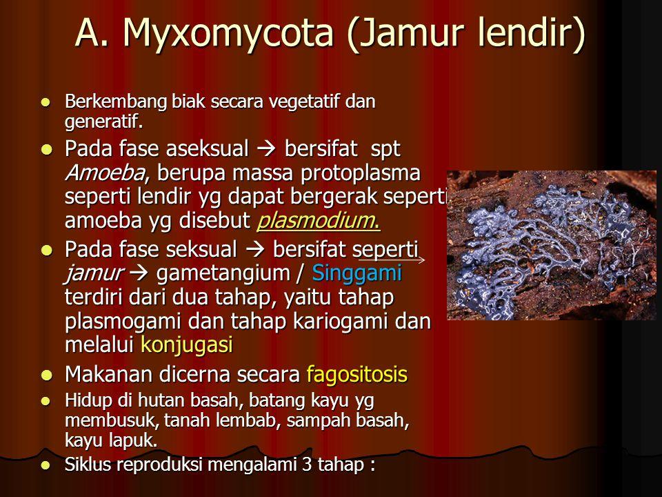 A. Myxomycota (Jamur lendir) Berkembang biak secara vegetatif dan generatif. Berkembang biak secara vegetatif dan generatif. Pada fase aseksual  bers