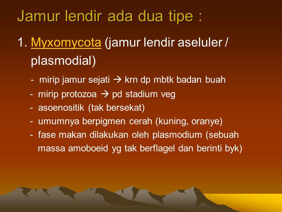 Jamur lendir ada dua tipe : 1. Myxomycota (jamur lendir aseluler /Myxomycota plasmodial) - mirip jamur sejati  krn dp mbtk badan buah - mirip protozo