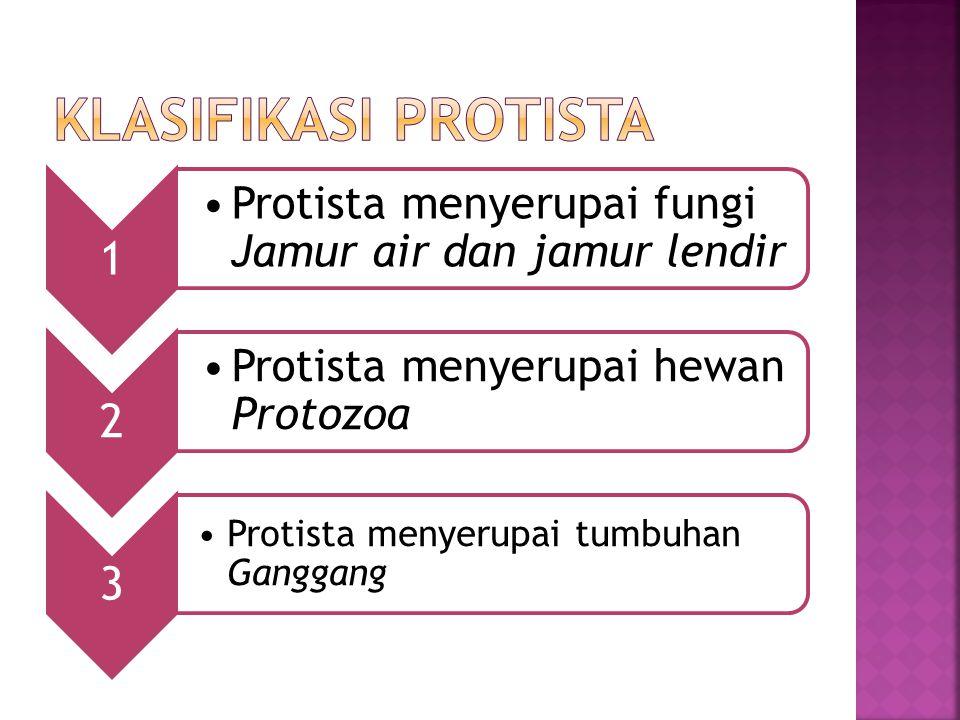 1 Protista menyerupai fungi Jamur air dan jamur lendir 2 Protista menyerupai hewan Protozoa 3 Protista menyerupai tumbuhan Ganggang