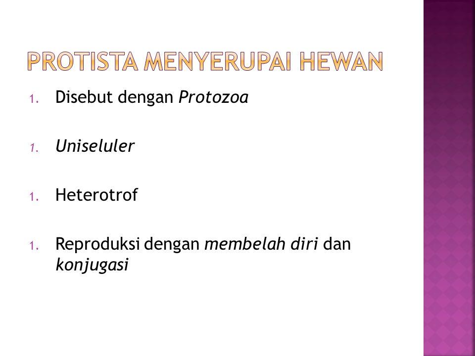 1. Disebut dengan Protozoa 1. Uniseluler 1. Heterotrof 1. Reproduksi dengan membelah diri dan konjugasi