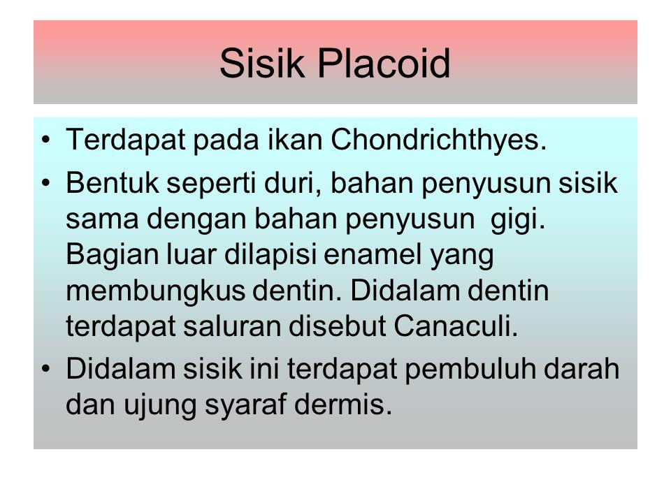 Sisik Placoid Terdapat pada ikan Chondrichthyes.