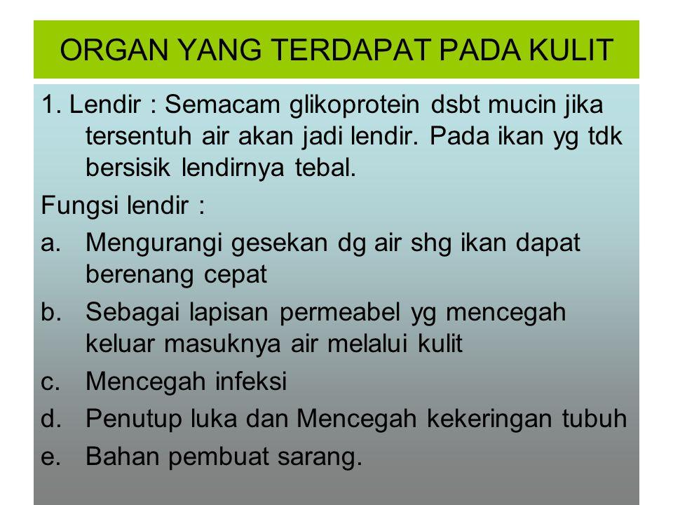 ORGAN YANG TERDAPAT PADA KULIT 1.