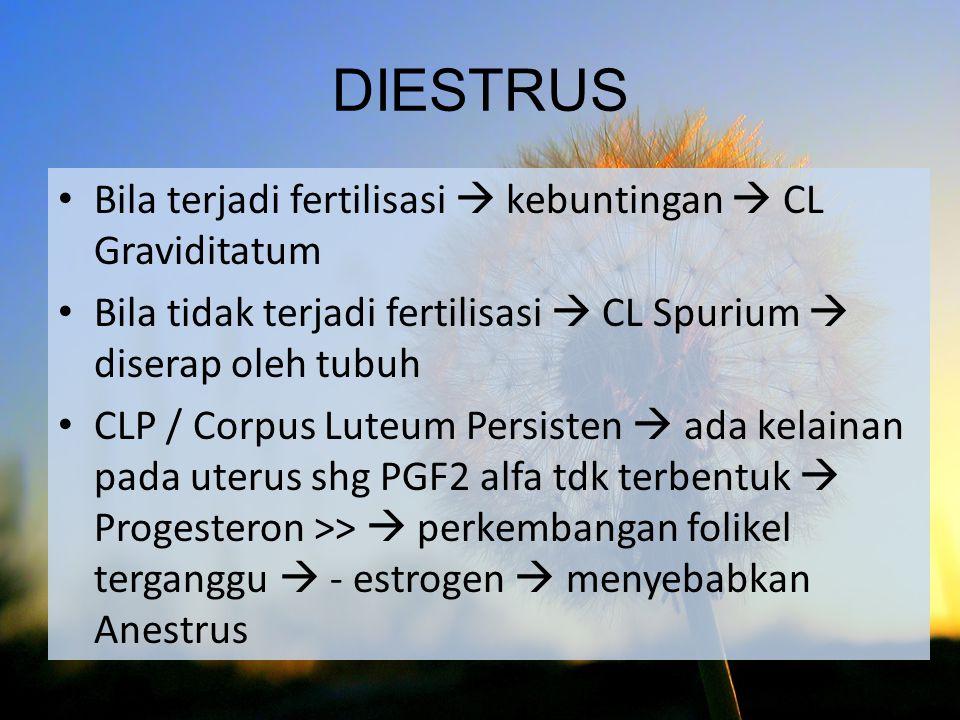 Bila terjadi fertilisasi  kebuntingan  CL Graviditatum Bila tidak terjadi fertilisasi  CL Spurium  diserap oleh tubuh CLP / Corpus Luteum Persiste