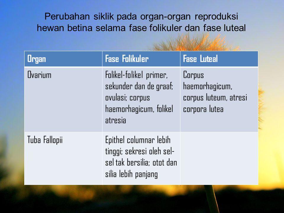 Perubahan siklik pada organ-organ reproduksi hewan betina selama fase folikuler dan fase luteal OrganFase FolikulerFase Luteal OvariumFolikel-folikel