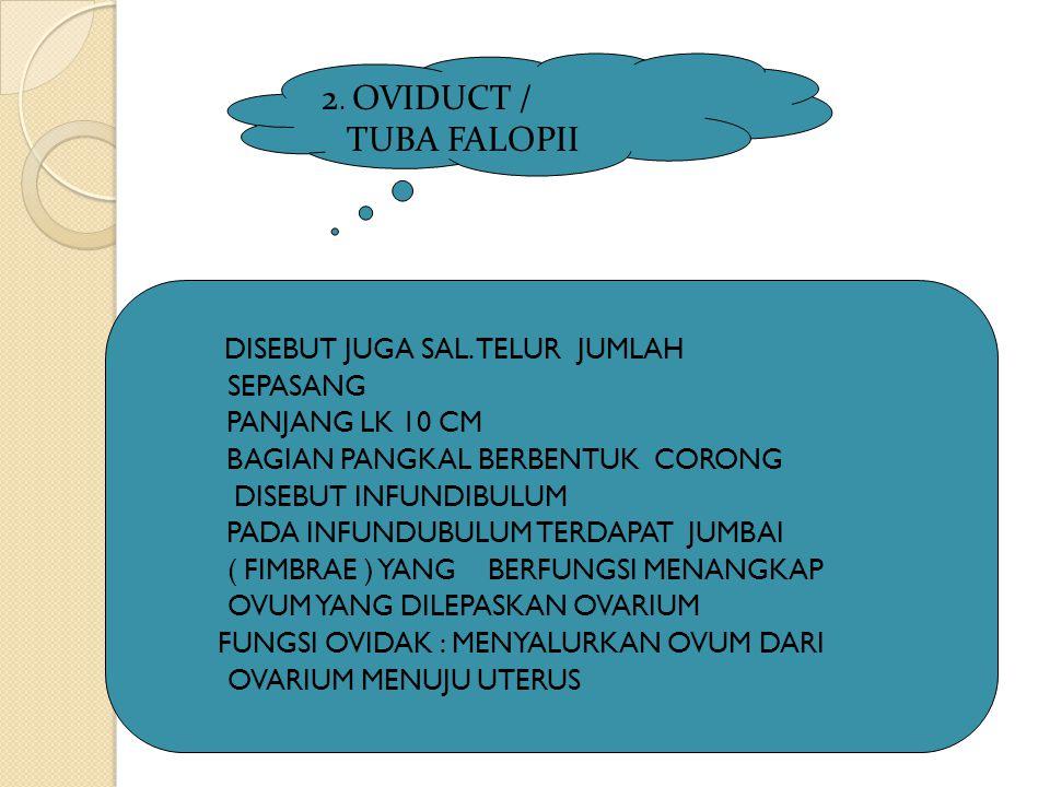DISEBUT JUGA SAL. TELUR JUMLAH SEPASANG PANJANG LK 10 CM BAGIAN PANGKAL BERBENTUK CORONG DISEBUT INFUNDIBULUM PADA INFUNDUBULUM TERDAPAT JUMBAI ( FIMB