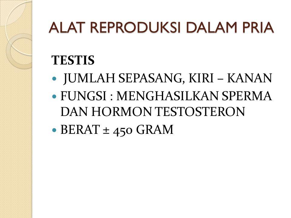 Testis and epididymis sperm tubules epididymis vas deferens (sperm duct)