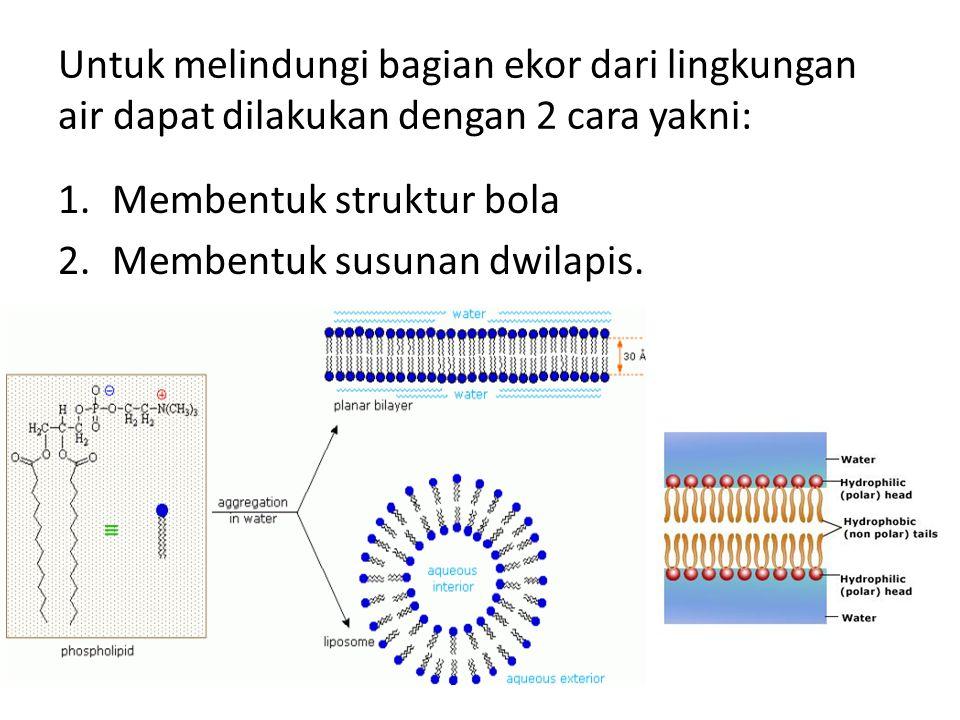 Untuk melindungi bagian ekor dari lingkungan air dapat dilakukan dengan 2 cara yakni: 1.Membentuk struktur bola 2.Membentuk susunan dwilapis.