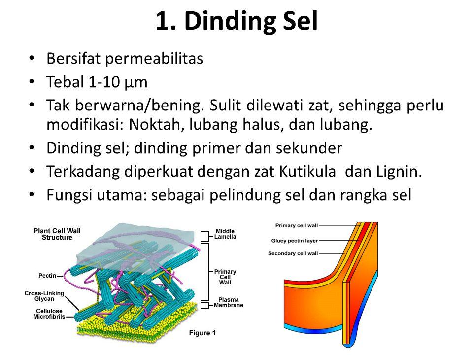 1. Dinding Sel Bersifat permeabilitas Tebal 1-10 µm Tak berwarna/bening. Sulit dilewati zat, sehingga perlu modifikasi: Noktah, lubang halus, dan luba