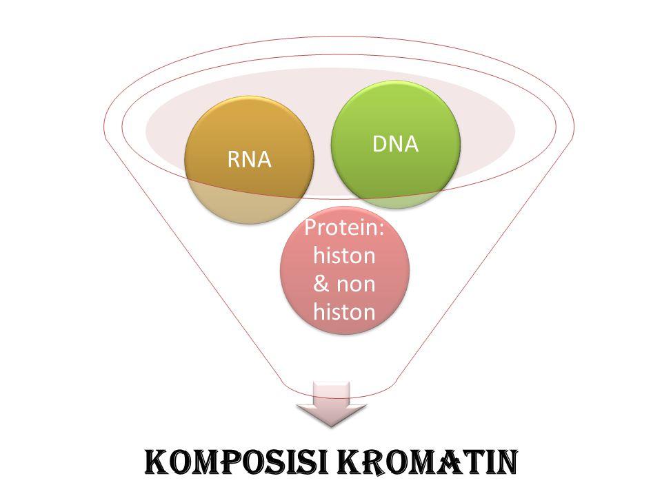 Komposisi Kromatin Protein: histon & non histon RNADNA