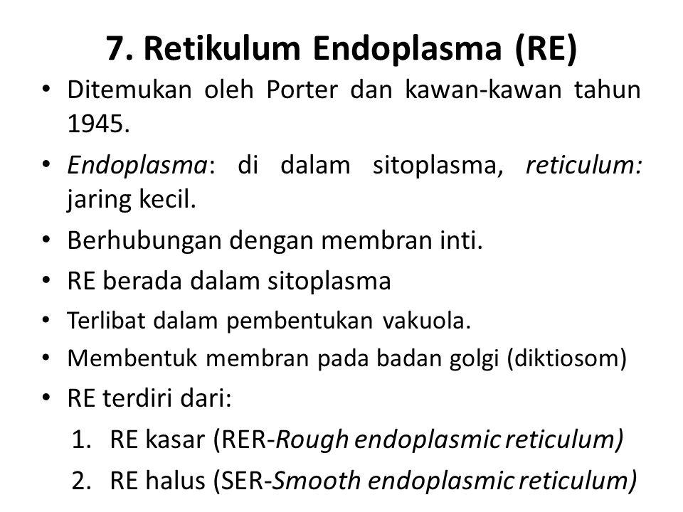 7. Retikulum Endoplasma (RE) Ditemukan oleh Porter dan kawan-kawan tahun 1945. Endoplasma: di dalam sitoplasma, reticulum: jaring kecil. Berhubungan d