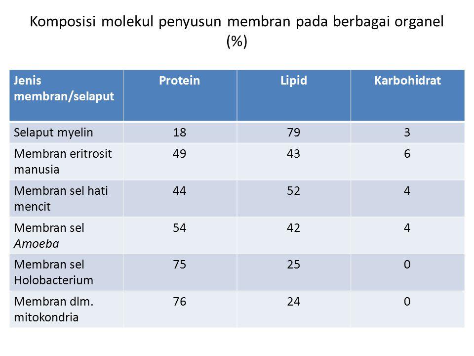 Komposisi molekul penyusun membran pada berbagai organel (%) Jenis membran/selaput ProteinLipidKarbohidrat Selaput myelin18793 Membran eritrosit manus