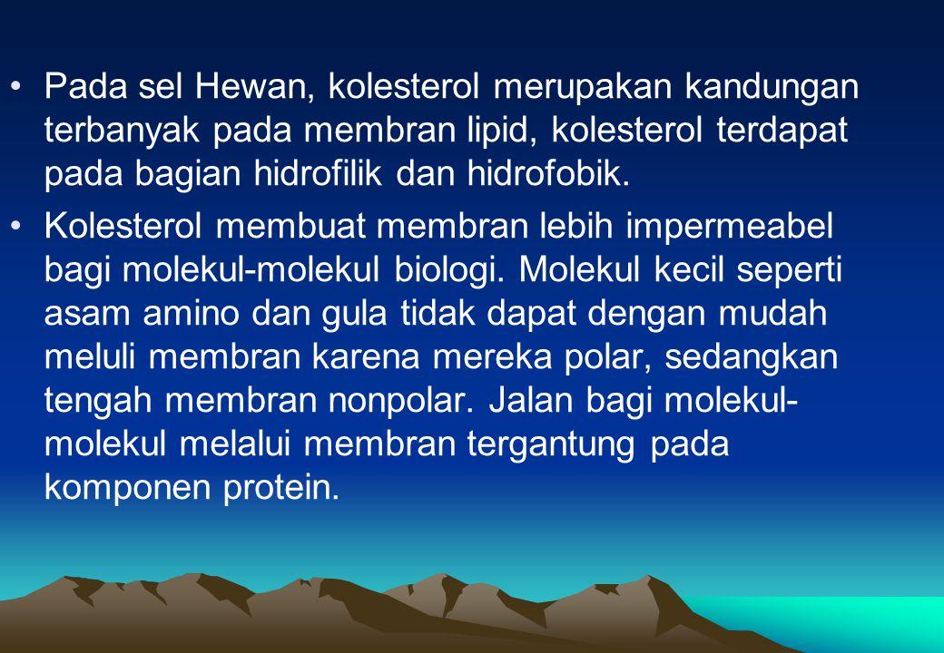 Pada sel Hewan, kolesterol merupakan kandungan terbanyak pada membran lipid, kolesterol terdapat pada bagian hidrofilik dan hidrofobik.