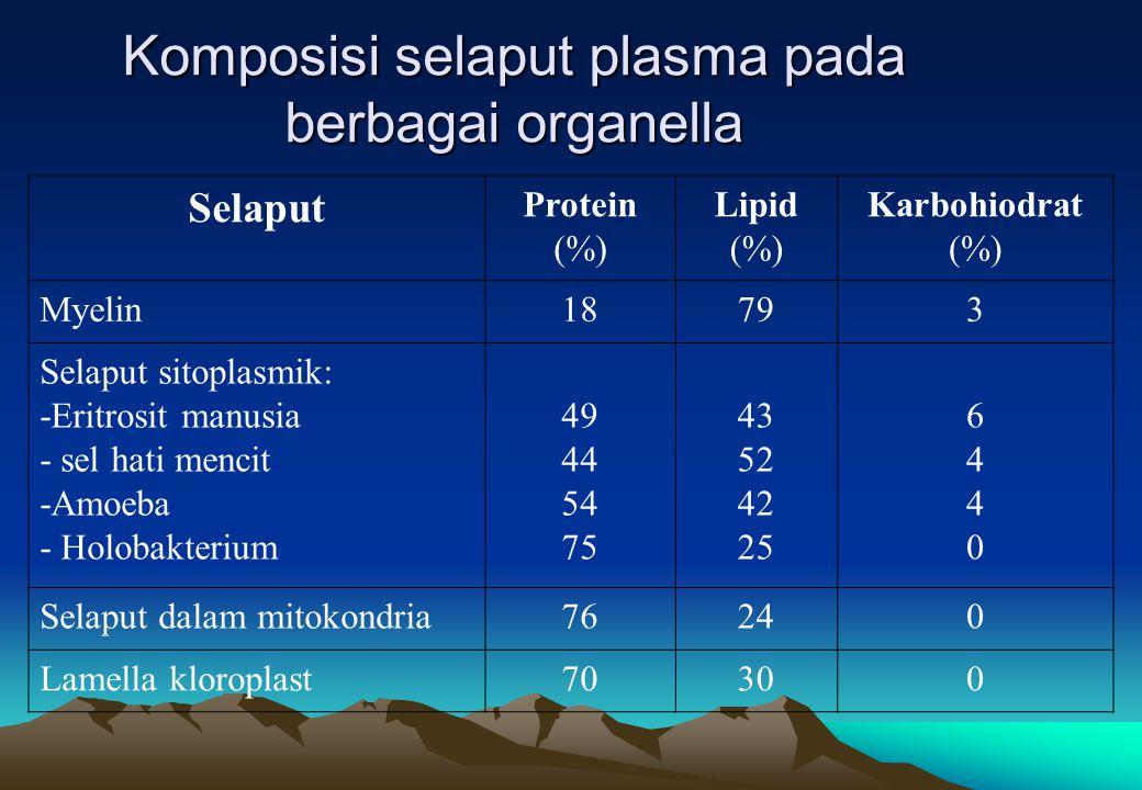 Komposisi selaput plasma pada berbagai organella Selaput Protein (%) Lipid (%) Karbohiodrat (%) Myelin18793 Selaput sitoplasmik: -Eritrosit manusia - sel hati mencit -Amoeba - Holobakterium 49 44 54 75 43 52 42 25 64406440 Selaput dalam mitokondria76240 Lamella kloroplast70300