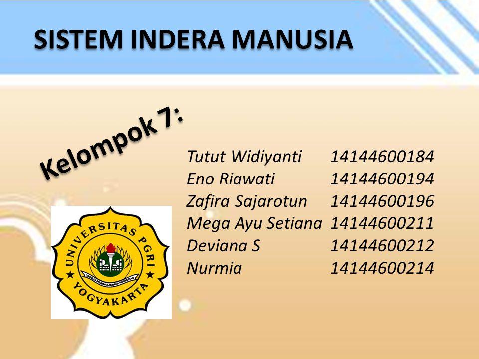 SISTEM INDERA MANUSIA Tutut Widiyanti14144600184 Eno Riawati14144600194 Zafira Sajarotun14144600196 Mega Ayu Setiana14144600211 Deviana S14144600212 N