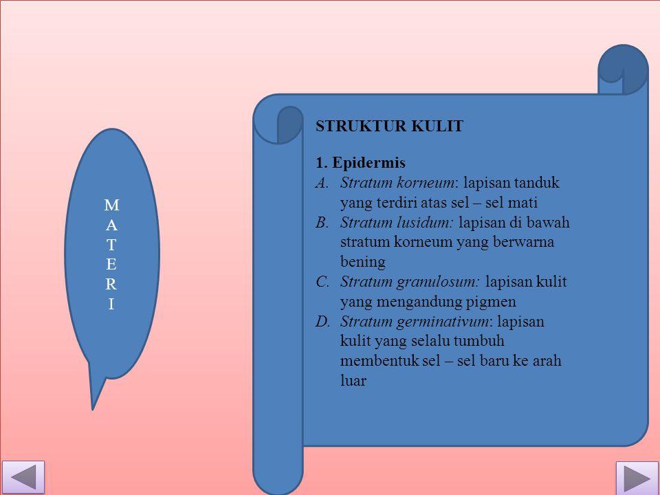 STRUKTUR KULIT 1.
