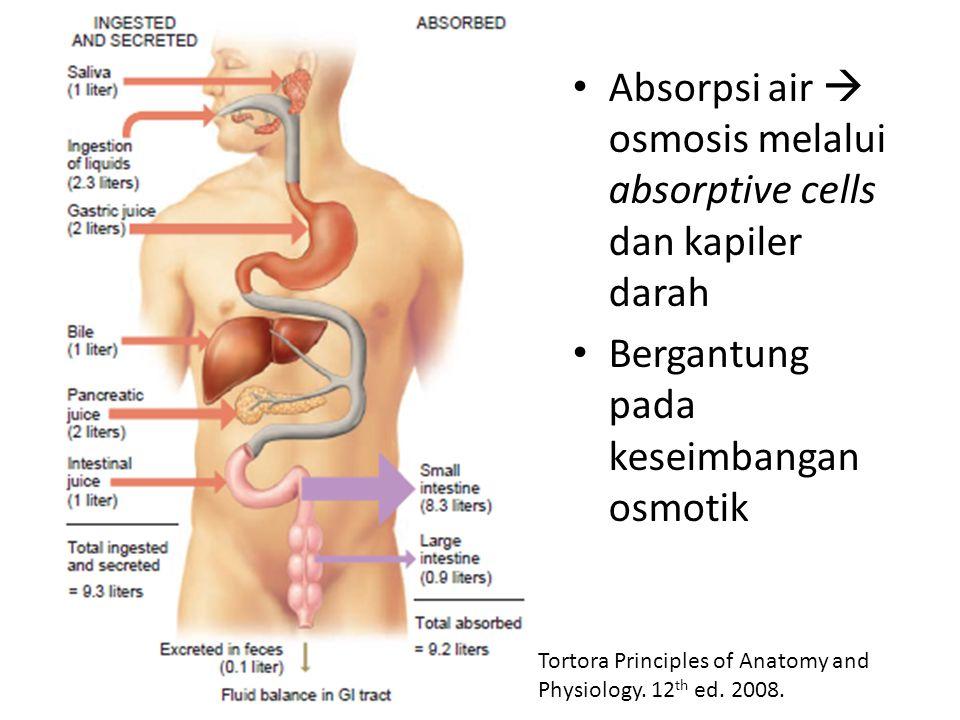 Absorpsi air  osmosis melalui absorptive cells dan kapiler darah Bergantung pada keseimbangan osmotik Tortora Principles of Anatomy and Physiology. 1