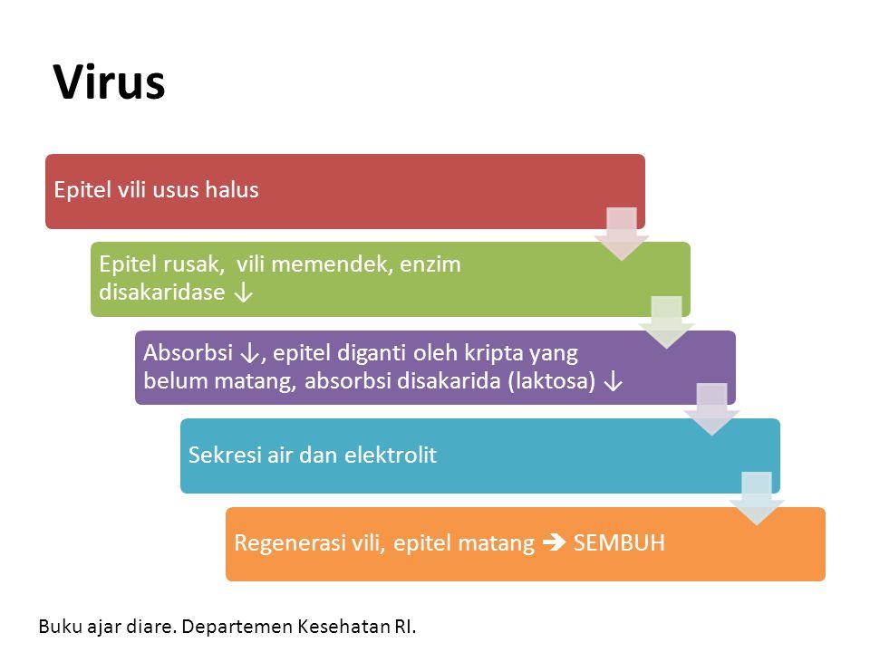Virus Epitel vili usus halus Epitel rusak, vili memendek, enzim disakaridase ↓ Absorbsi ↓, epitel diganti oleh kripta yang belum matang, absorbsi disa