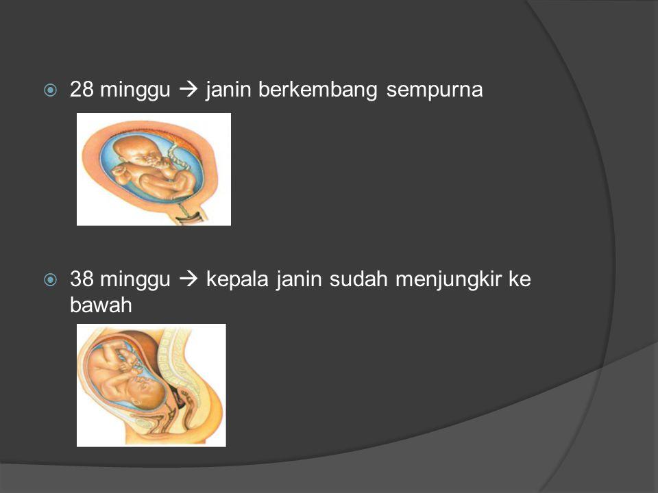 Proses pertumbuhan manusia setelah lahir  Tahap orok  Tahap bayi  Tahap anak-anak  Tahap ramaja atau tahap puberitas