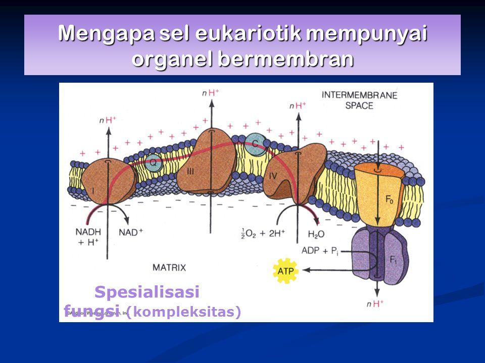 Mengapa sel eukariotik mempunyai organel bermembran Spesialisasi fungsi (kompleksitas)