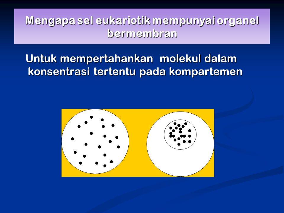 Mengapa sel eukariotik mempunyai organel bermembran Untuk mempertahankan molekul dalam konsentrasi tertentu pada kompartemen Untuk mempertahankan molekul dalam konsentrasi tertentu pada kompartemen