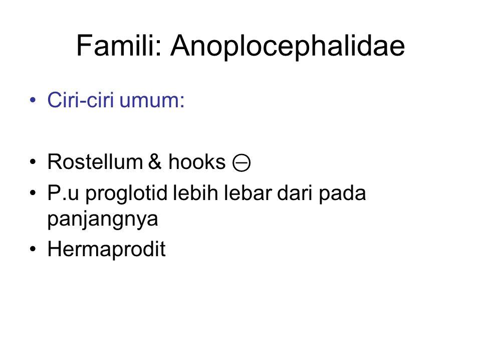 Famili: Anoplocephalidae Ciri-ciri umum: Rostellum & hooks ⊝ P.u proglotid lebih lebar dari pada panjangnya Hermaprodit