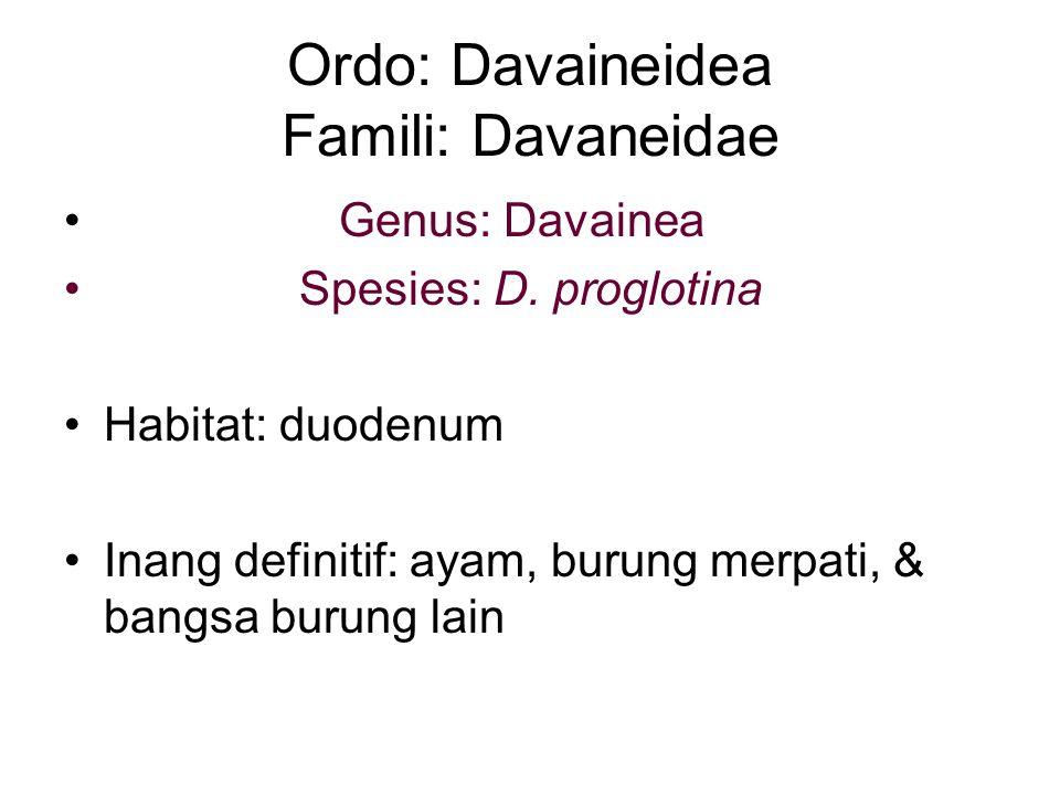 Ordo: Davaineidea Famili: Davaneidae Genus: Davainea Spesies: D.