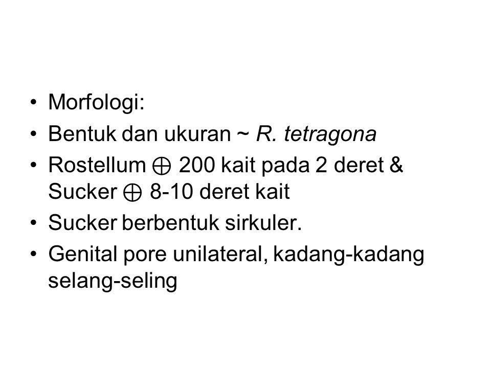 Morfologi: Bentuk dan ukuran ~ R.