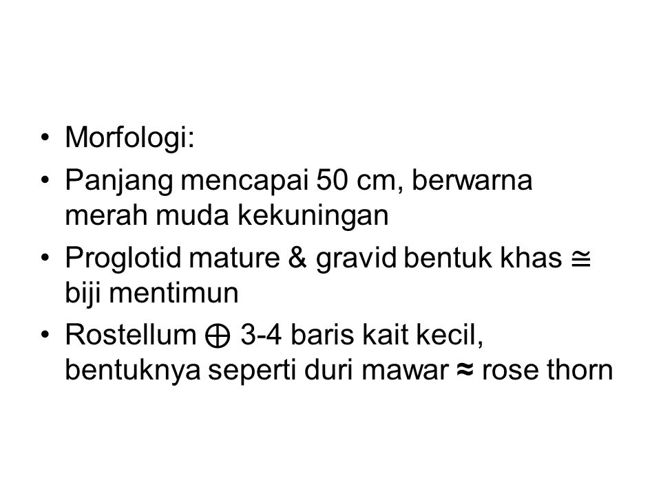 Morfologi: Panjang mencapai 50 cm, berwarna merah muda kekuningan Proglotid mature & gravid bentuk khas ≅ biji mentimun Rostellum ⊕ 3-4 baris kait kecil, bentuknya seperti duri mawar ≈ rose thorn