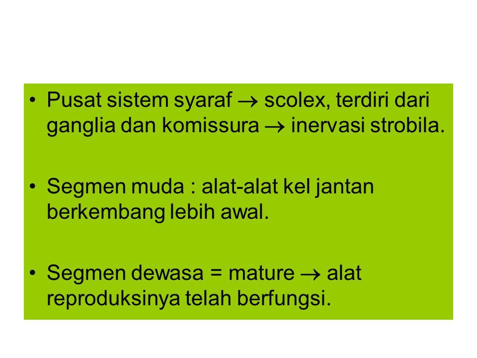 Spesies: R.cesticillus Habitat: usus halus Inang definitif: bangsa unggas Inang perantara: M.