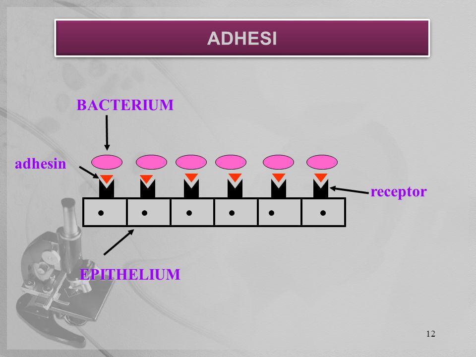 12 adhesin EPITHELIUM receptor BACTERIUM ADHESI
