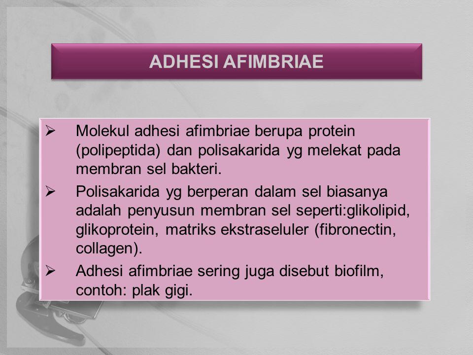 ADHESI AFIMBRIAE  Molekul adhesi afimbriae berupa protein (polipeptida) dan polisakarida yg melekat pada membran sel bakteri.  Polisakarida yg berpe