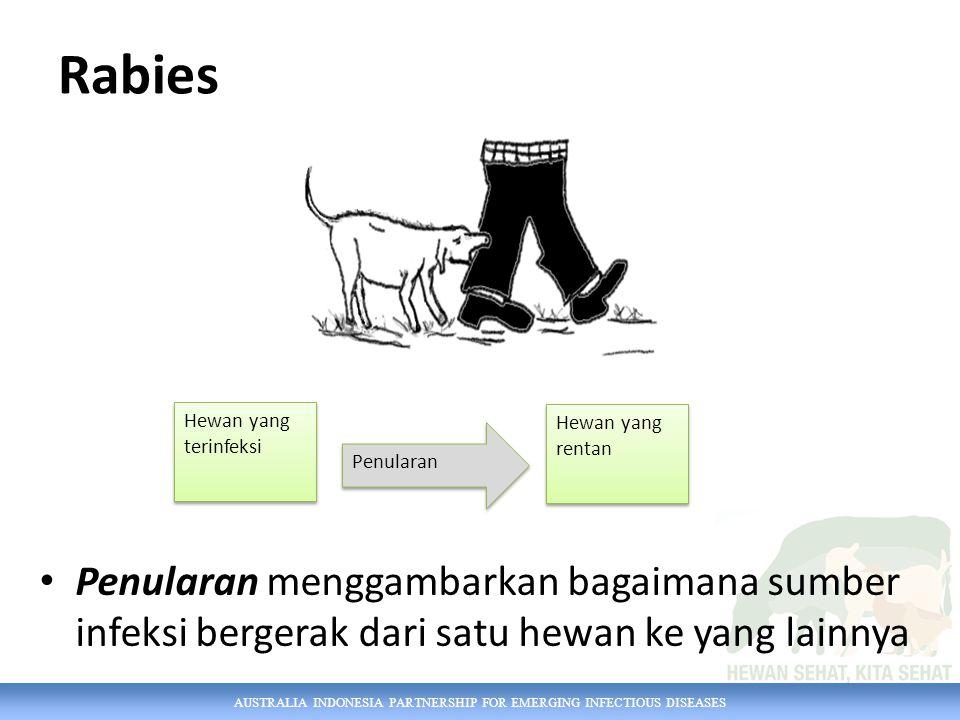 AUSTRALIA INDONESIA PARTNERSHIP FOR EMERGING INFECTIOUS DISEASES Bagaimana agen penyakit keluar dari hewan Permukaan tubuh – rambut, nanah, atau kudis (ringworm) Leleran dari hidung (virus influenza) Mulut – air liur (virus rabies dan PMK, TBC) Ambing – susu (bakteria yang menyebabkan radang ambing) Anus – feses (bakteri salmonella) Saluran perkencingan dan reproduksi – air kencing dan sperma (leptospirosis, campylobacter) Mata – air mata (konjungtivis) Darah– (demam Q oleh vektor kutu )