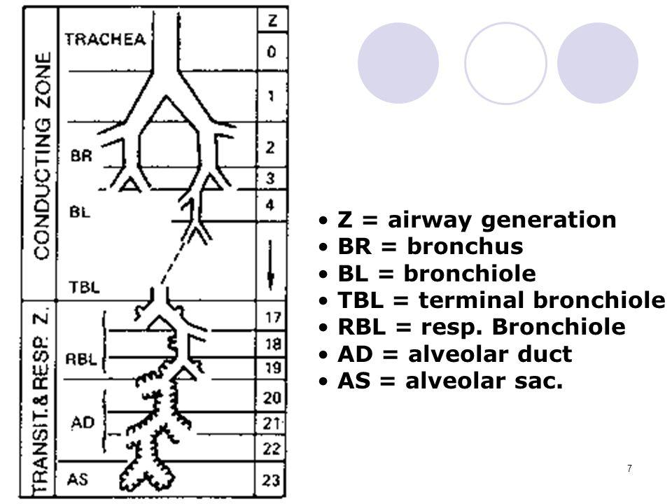7 Z = airway generation BR = bronchus BL = bronchiole TBL = terminal bronchiole RBL = resp.