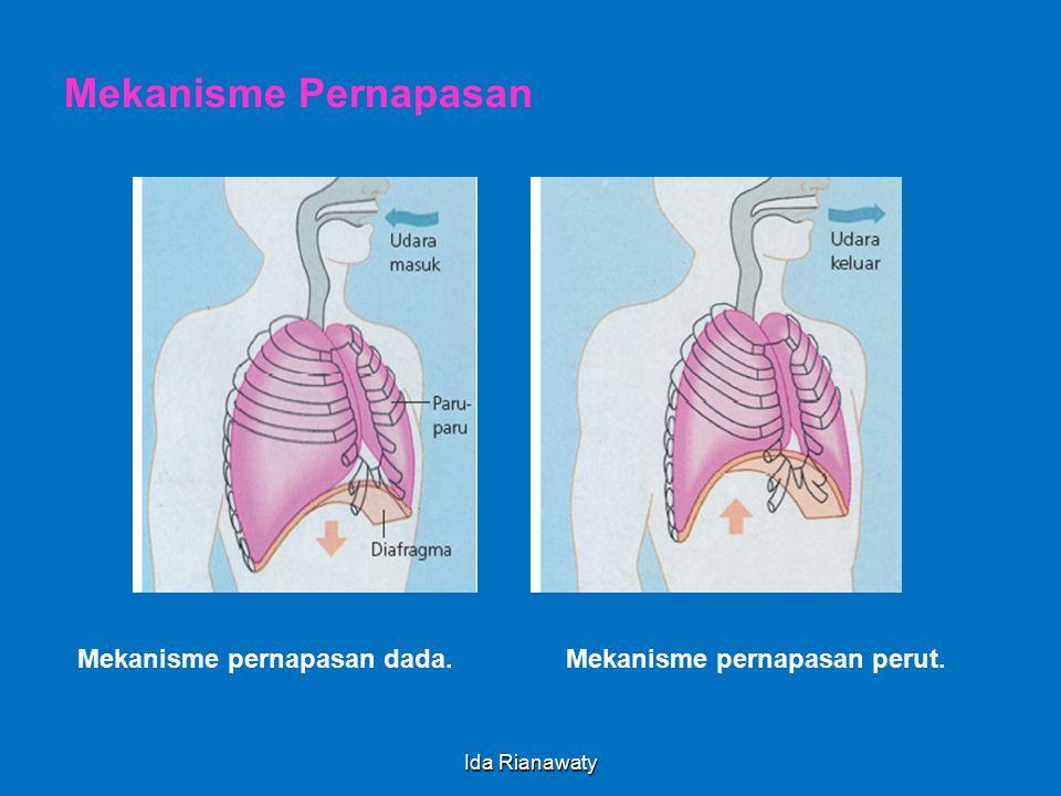 Pernapasan Dada  Pernafasan dada adalah pernafasan yang melibatkan /disebabkan otot antar tulang rusuk berkontraksi & relaksasi.