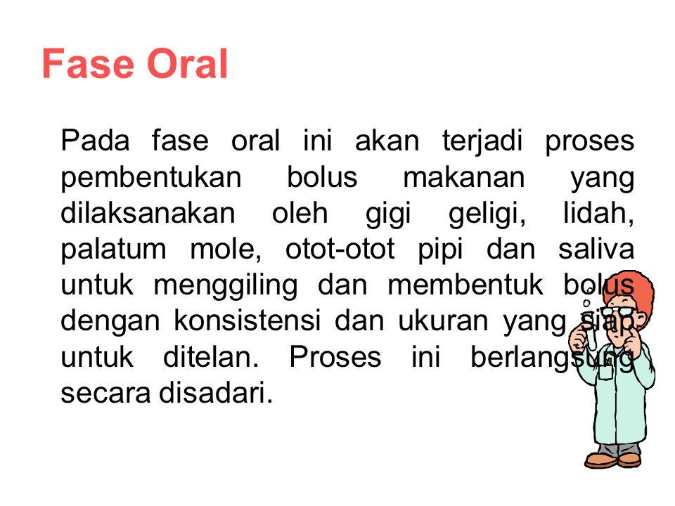 Fase Oral Pada fase oral ini akan terjadi proses pembentukan bolus makanan yang dilaksanakan oleh gigi geligi, lidah, palatum mole, otot-otot pipi dan saliva untuk menggiling dan membentuk bolus dengan konsistensi dan ukuran yang siap untuk ditelan.
