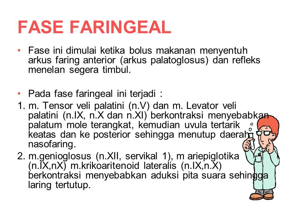 FASE FARINGEAL Fase ini dimulai ketika bolus makanan menyentuh arkus faring anterior (arkus palatoglosus) dan refleks menelan segera timbul.